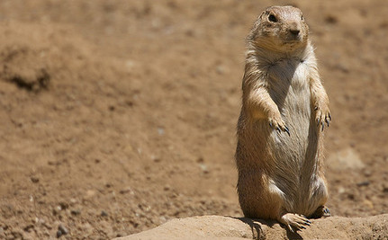 Prairie Dog Language Decoded, Turns Out They're Talking About Us