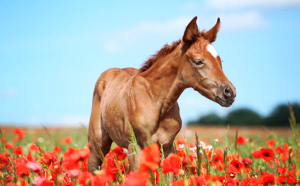 Tell Maine Horse Slaughter is NOT a Humane Option