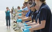52 Sea Turtles Converge on Florida Sand and Swim Free