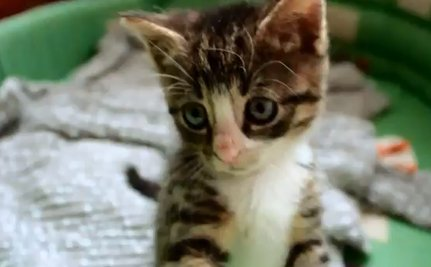Daily Cute: Ninja Cat Strikes Fear into the Hearts of Other Cats
