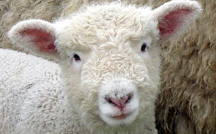 Top 10 Reasons Not to Wear Wool