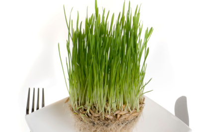 How About a Nice Plate of Grass for Dinner?