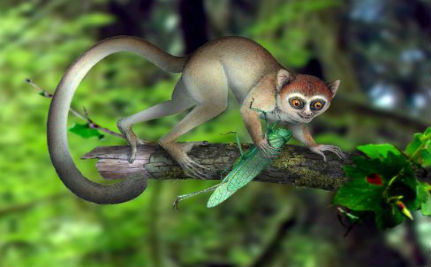 Can You See the Family Resemblance? Earliest Primate Fossil on Record Discovered