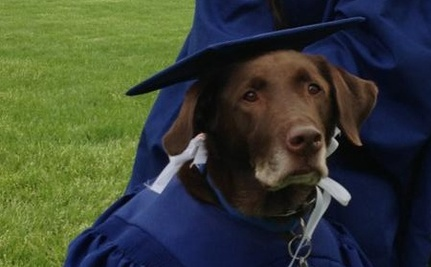 Service Dog Dons Cap And Gown To Graduate With His Human Care2 Causes