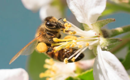 Could Sperm Banks Save Our Honeybees?
