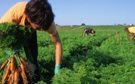 Will Wendy's Do the Right Thing By Farmworkers?