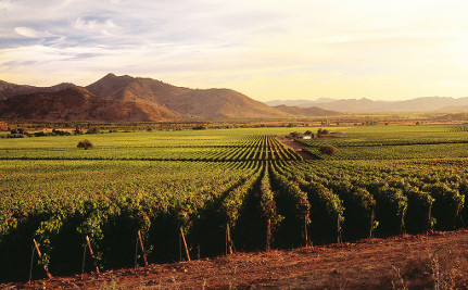 4 Things You Should Know About the California Wine Industry
