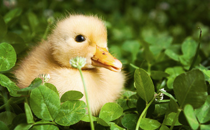 Amazon is Selling Foie Gras. Here's Why It Should Stop