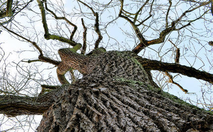 Deadly Tree Disease Spreads, Scientists Work on Genes to Save Them