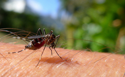 3 Chemical-Free Gadgets To Ward Off Biting Insects