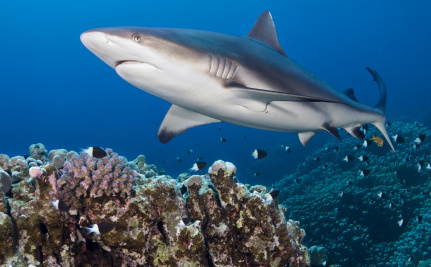Does the Shark Conservation Act Even Care About Sharks?
