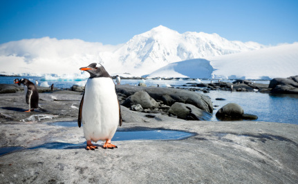 Why We Need to Create the World's Largest Marine Sanctuary in Antarctica
