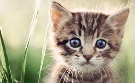 Switzerland's Cats Are Disappearing for the Fur Trade