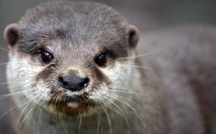 Daily Cute: Otter in the Garden!