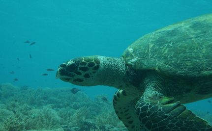 Another Reason to Hate Plastic Bags: Sea Turtles Eat Them