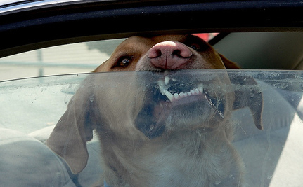 Leaving Pets in Parked Cars is STILL a Bad Idea