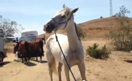 Tragic Discovery: 12 Starving Horses And Skeletal Remains