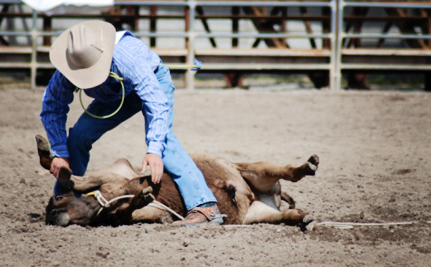 Calgary Stampede is Back, Still Awful for Animals