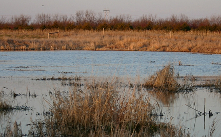 Want Protection from Superstorms? Bring Back Our Wetlands