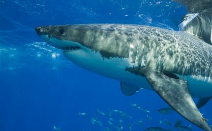 Success! EU Closes Shark Finning Ban Loopholes