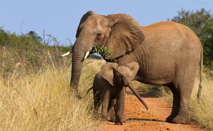10 Endangered Species You Can Still Hunt