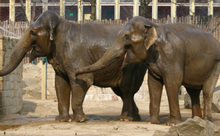 Two Former Circus Elephants Spared Euthanasia in France