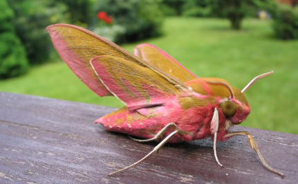 10 Magnificent Moths That Celebrate the Diversity of This World