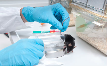 Drug Tests on Animals are Biased, Says New Report