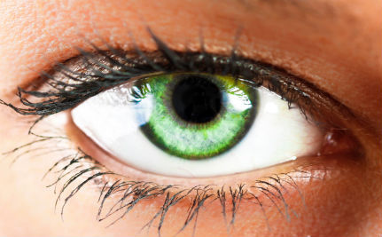 Could We Soon Regrow Lost Eyesight in the Lab?