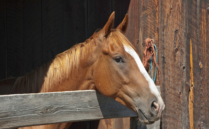 Veterinarian Responds to Simi Valley Horse Rescue Story