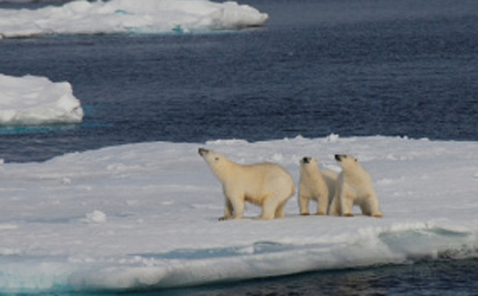 Global Warming is Turning The North Pole Into The North Po