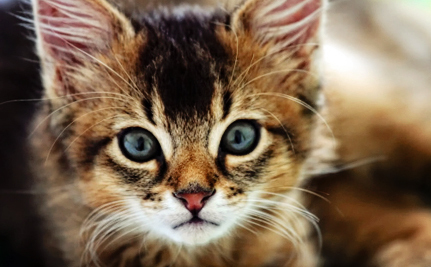 Cat Allergy Research Brings Hope of a Cure