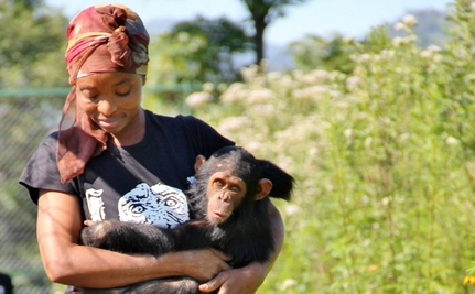 "Fleet of ""Moms"" Rescue Baby Chimps and Surprise Quarrel Erupts"