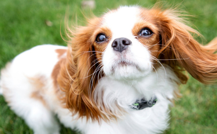7 Tips To Prevent Your Pet From Being Stolen Or Sold