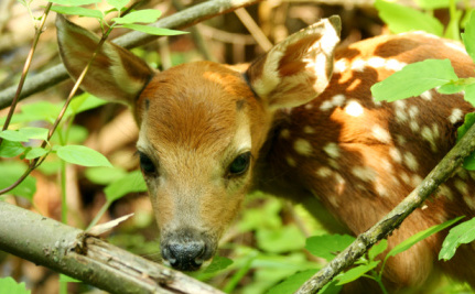 Fawn Euthanized After Armed Agents Raid No-Kill Shelter