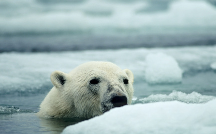 This Polar Bear Starved to Death Because of Climate Change