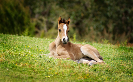 Horses Get Lifesaving Reprieve from Slaughter in the United States