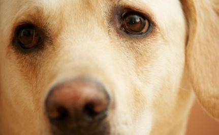 Success! Man Who Killed Dog with Bomb to Face Animal Cruelty Charges