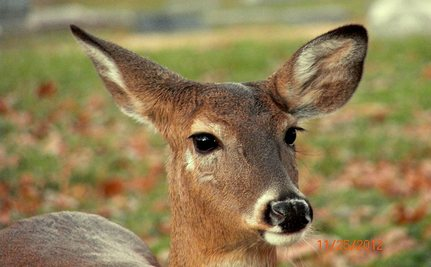 Ella, the Loving Deer, Shot Dead at Her Cemetery Home
