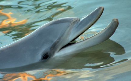 Why are Dead Bottlenose Dolphins Washing Up on the US East Coast?