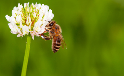 EPA Thinks a Piece of Paper Will Save Bees From Pesticides