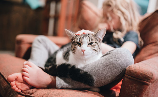 10 Ways to Bond with Your New Rescue Cat