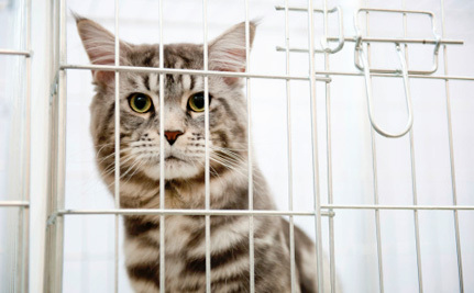 Just Kidding, Washington University Didn't Stop Torturing Cats