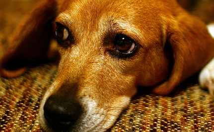 Is Your Work Schedule Making Your Pet Depressed?