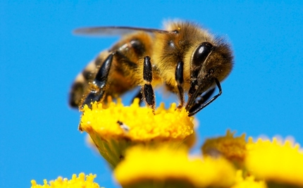 6 Foods That Won�t Grow if We Keep Letting Bees Die