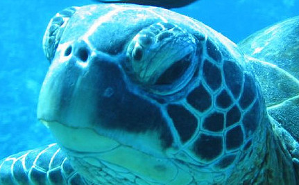 Teen Saves Leatherback Sea Turtle's Life