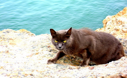 Once-Loved Cats Now Marooned on Beach Jetty