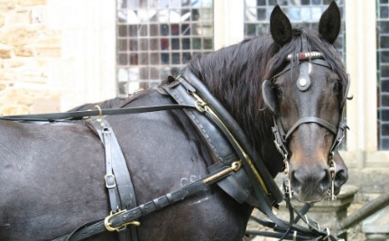 Jerry the Carriage Horse's Death Remains a Mystery After Owners Try to Hide it