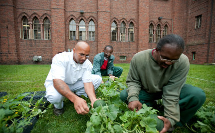 Organic Gardening Takes Root in New York Prison System