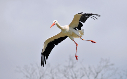 How Could a Stork Be Accused of Spying in Egypt?